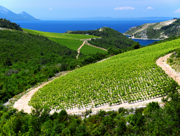 Home-Box_Signature-Experiences_Wine-Tour-of-Pelješac.png
